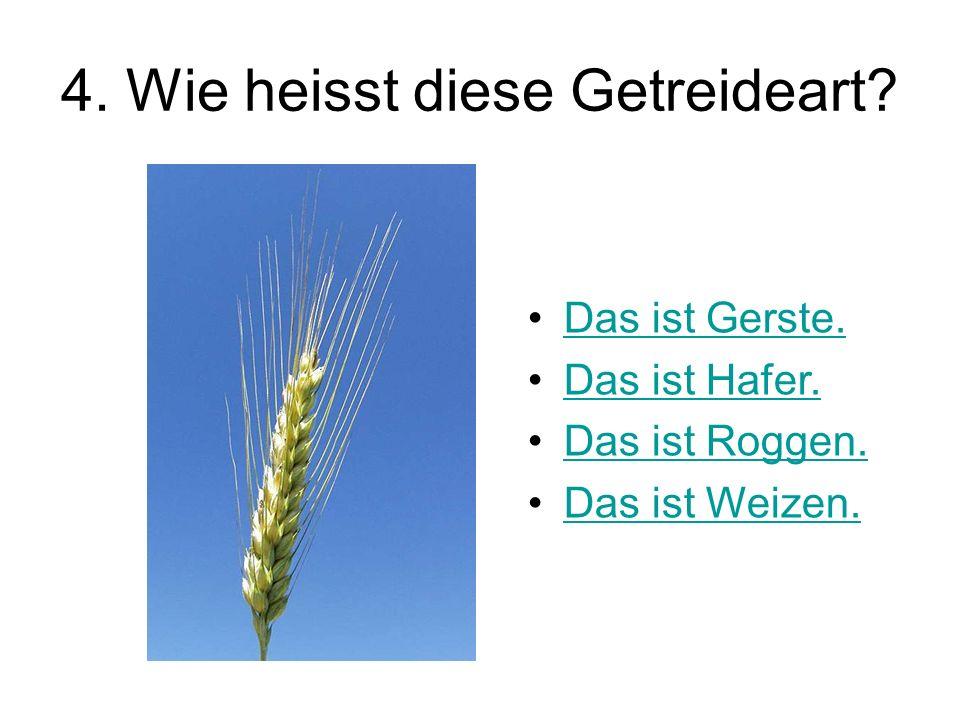 4. Wie heisst diese Getreideart? Das ist Gerste.Das ist Gerste. Das ist Hafer. Das ist Roggen. Das ist Weizen.
