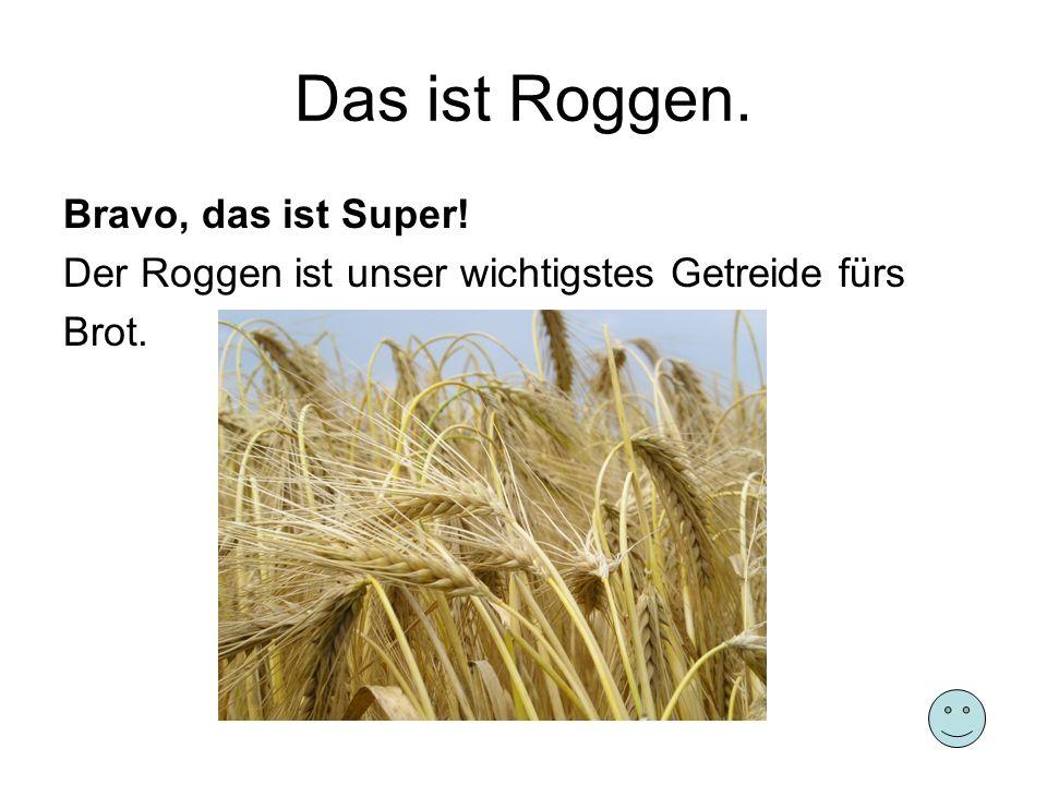 Das ist Roggen. Bravo, das ist Super! Der Roggen ist unser wichtigstes Getreide fürs Brot.
