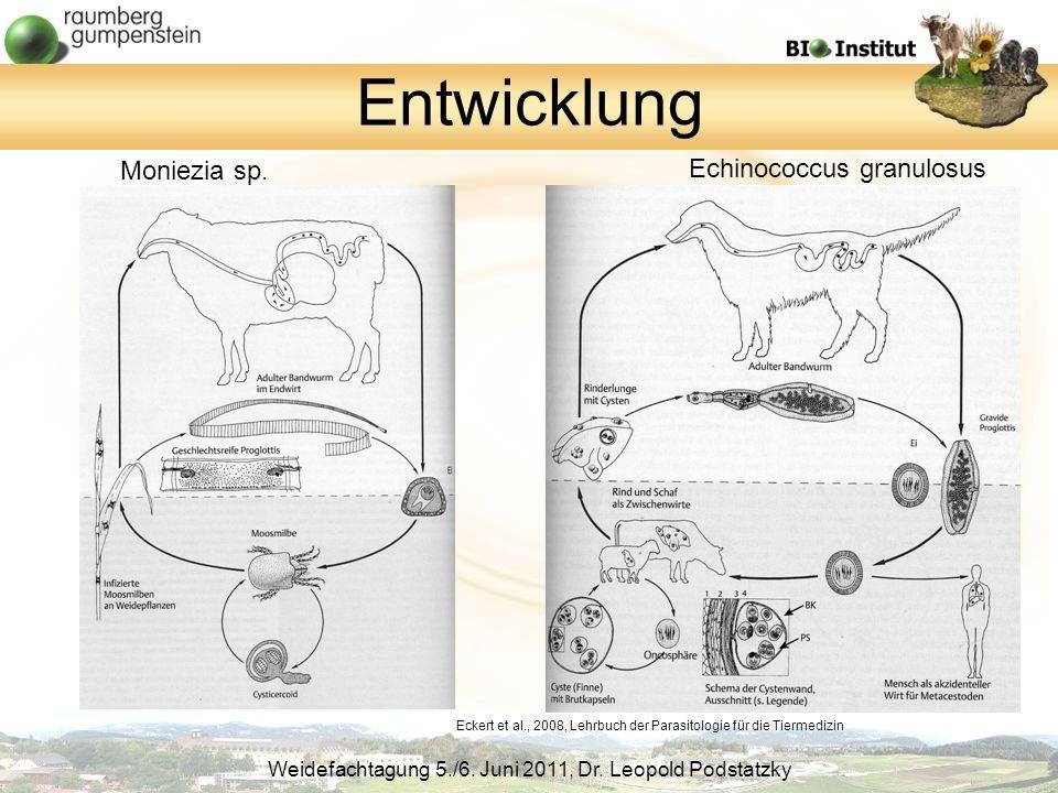 Weidefachtagung 5./6.Juni 2011, Dr. Leopold Podstatzky Entwicklung Moniezia sp.