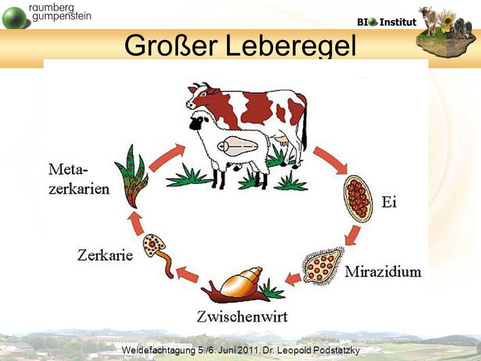 Weidefachtagung 5./6. Juni 2011, Dr. Leopold Podstatzky Großer Leberegel
