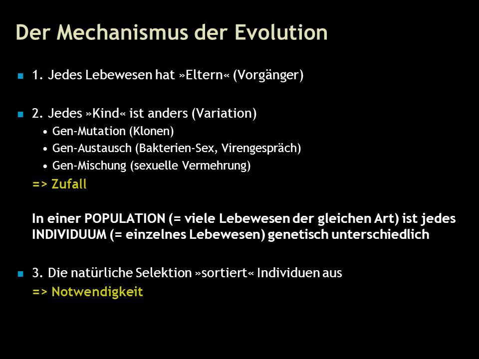 10 Der Mechanismus der Evolution 1. Jedes Lebewesen hat »Eltern« (Vorgänger) 2.