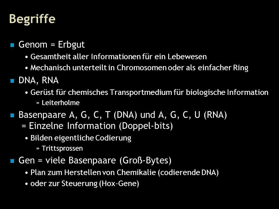 14 Begriffe Genom = Erbgut Gesamtheit aller Informationen für ein Lebewesen Mechanisch unterteilt in Chromosomen oder als einfacher Ring DNA, RNA Gerüst für chemisches Transportmedium für biologische Information »Leiterholme Basenpaare A, G, C, T (DNA) und A, G, C, U (RNA) = Einzelne Information (Doppel-bits) Bilden eigentliche Codierung »Trittsprossen Gen = viele Basenpaare (Groß-Bytes) Plan zum Herstellen von Chemikalie (codierende DNA) oder zur Steuerung (Hox-Gene)