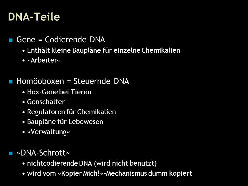 15 DNA-Teile Gene = Codierende DNA Enthält kleine Baupläne für einzelne Chemikalien »Arbeiter« Homöoboxen = Steuernde DNA Hox-Gene bei Tieren Genschalter Regulatoren für Chemikalien Baupläne für Lebewesen »Verwaltung« »DNA-Schrott« nichtcodierende DNA (wird nicht benutzt) wird vom »Kopier Mich!«-Mechanismus dumm kopiert