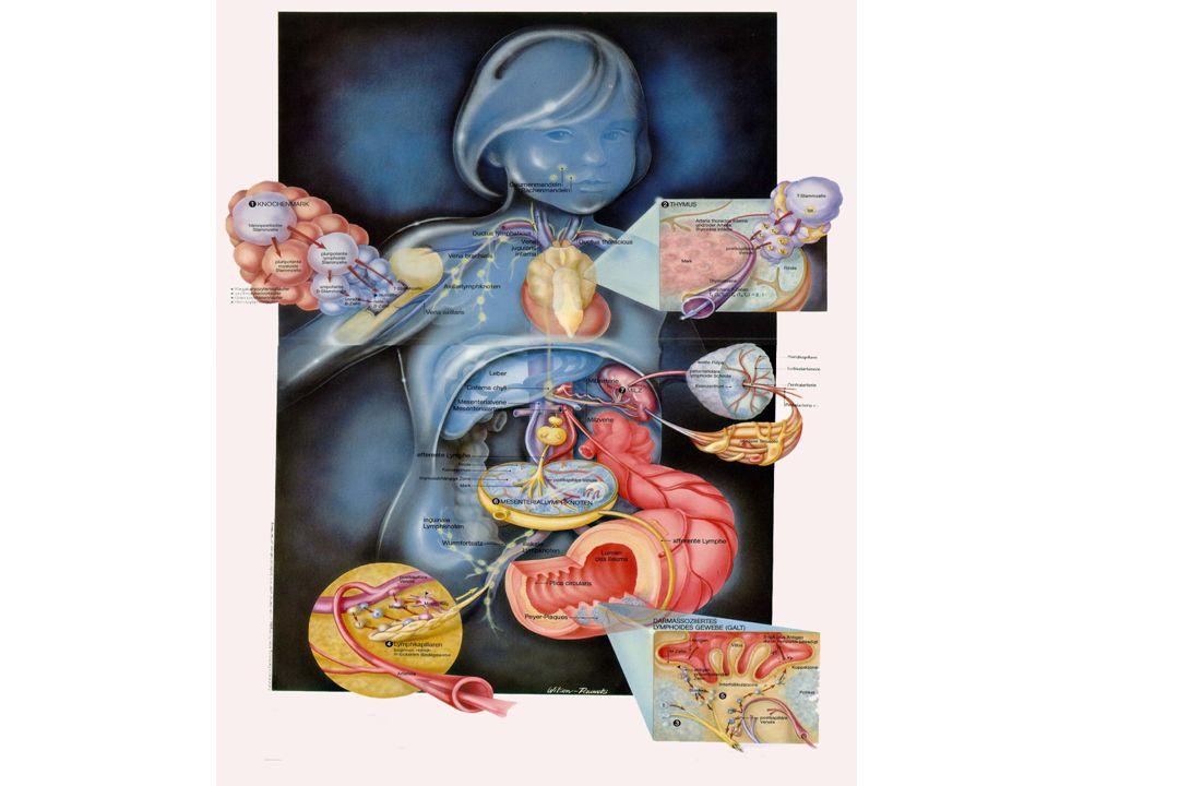 Neutrophils Platelets Hematologic Changes Following Autologous and Allogeneic Transplantation Allo Auto ASH Plenary 2001