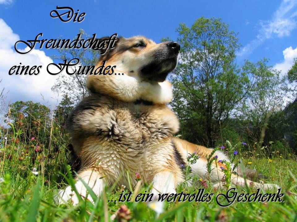 Schenk einen Hund ein klein wenig Zeit und Liebe und du wirst die treueste Freundschaft deines Lebens schließen.