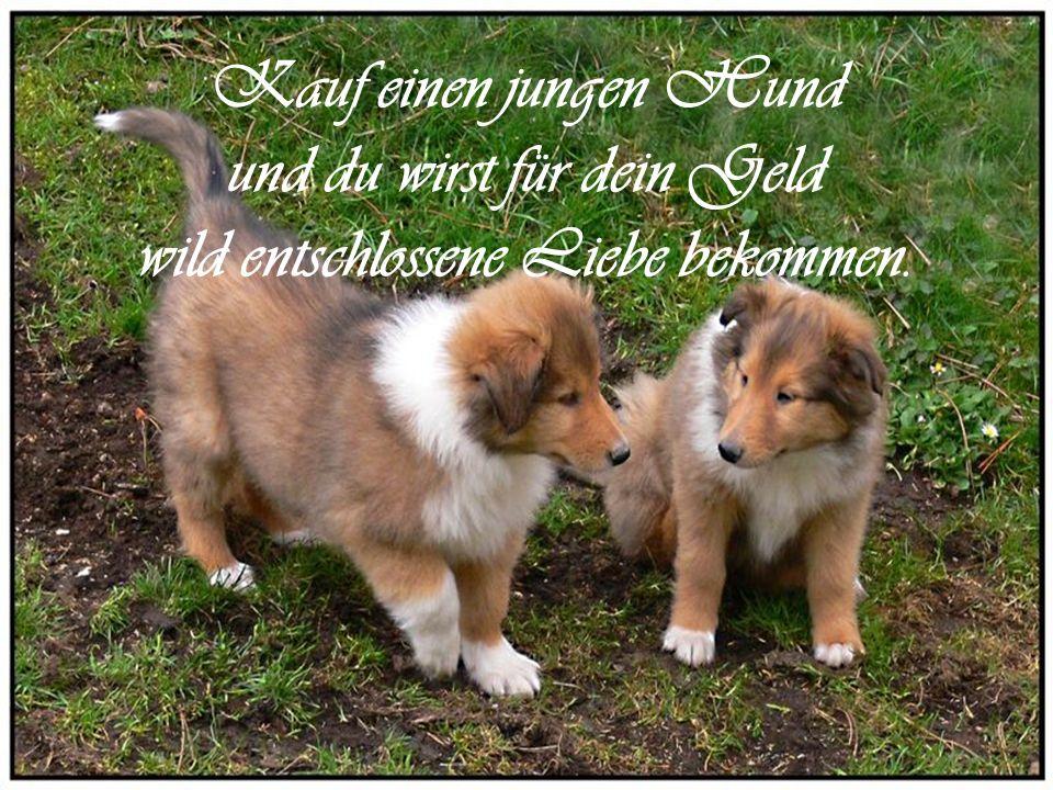 …ist ein wertvolles Geschenk. Die Freundschaft eines Hundes…