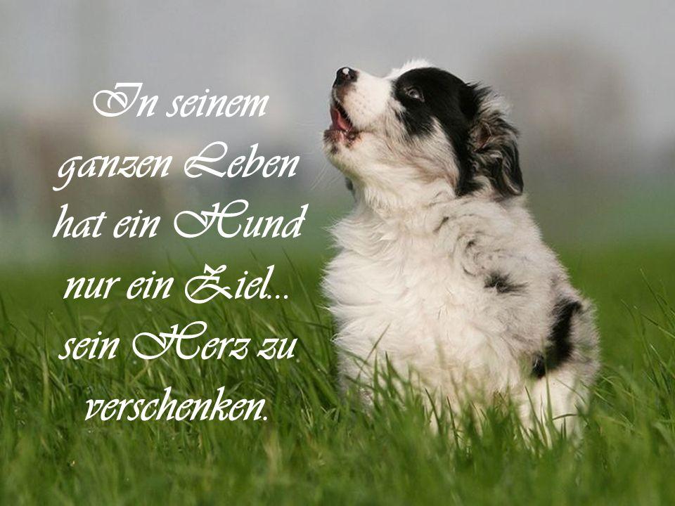 Solange Menschen denken, dass Tiere nicht fühlen,müssen Tiere fühlen, dass Menschen nicht denken.