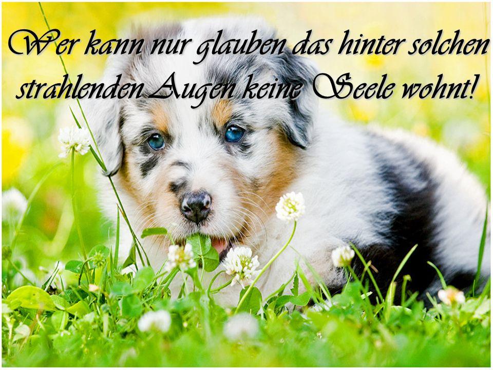 Warum sollte man sich von der endlosen Verstellung, Freiheit und Heimtücke, der Menschen erholen, wenn die Hunde nicht wären, in deren ehrliches Gesicht man ohne Misstrauen schauen kann