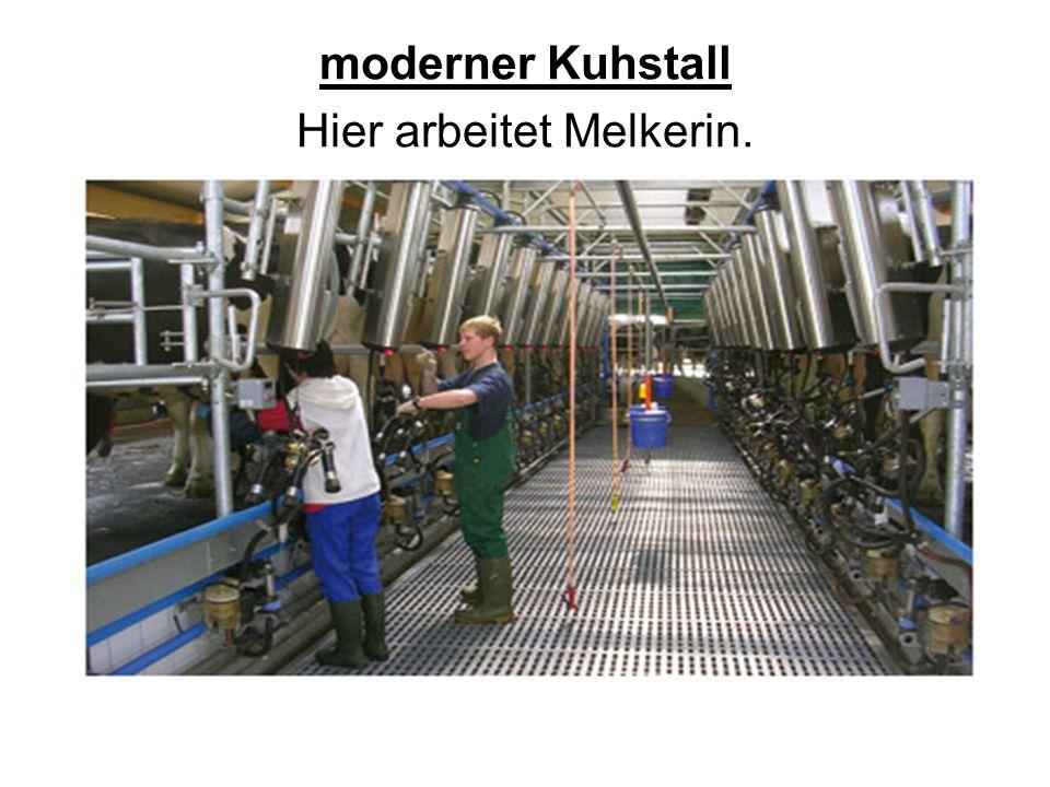 moderner Kuhstall Hier arbeitet Melkerin.