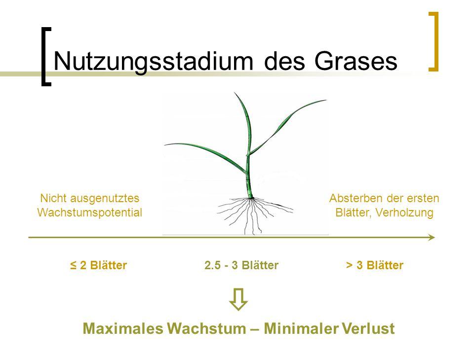 Nutzungsstadium des Grases Nicht ausgenutztes Wachstumspotential Absterben der ersten Blätter, Verholzung ≤ 2 Blätter2.5 - 3 Blätter> 3 Blätter  Maximales Wachstum – Minimaler Verlust