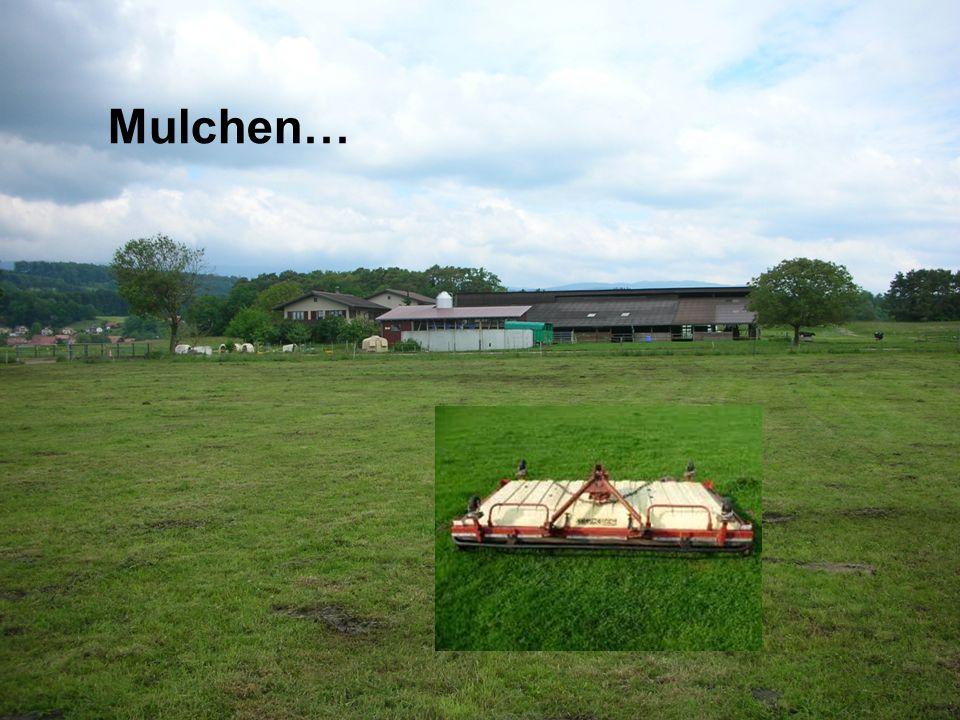 Mulchen…