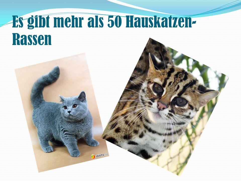 Es gibt mehr als 50 Hauskatzen- Rassen