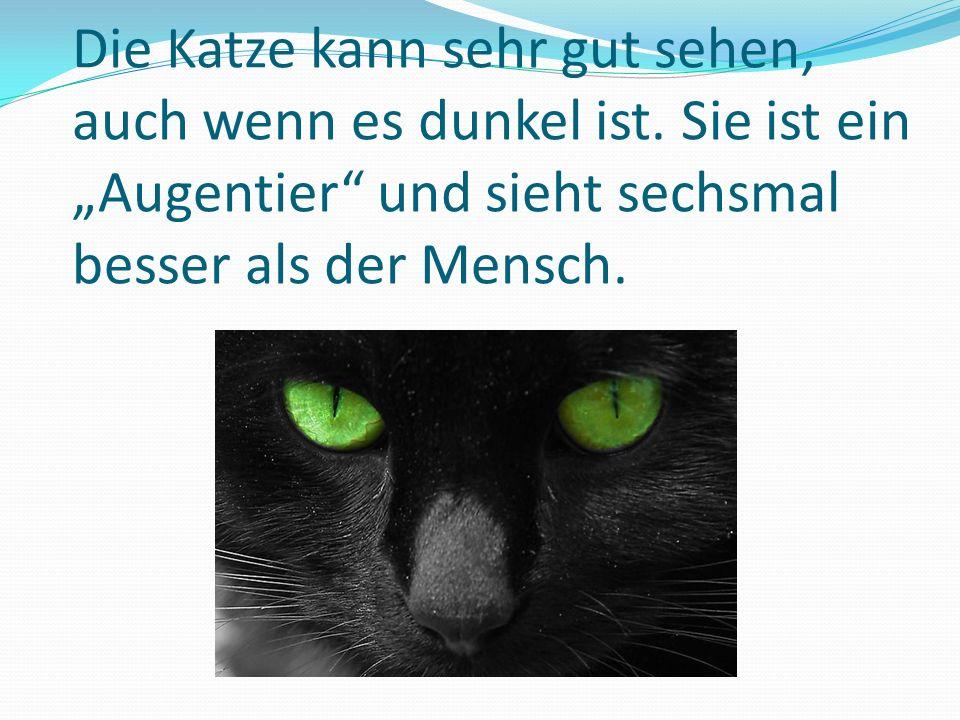 """Die Katze kann sehr gut sehen, auch wenn es dunkel ist. Sie ist ein """"Augentier"""" und sieht sechsmal besser als der Mensch."""