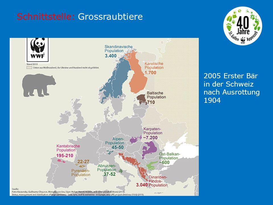 Schnittstelle: Grossraubtiere 2005 Erster Bär in der Schweiz nach Ausrottung 1904