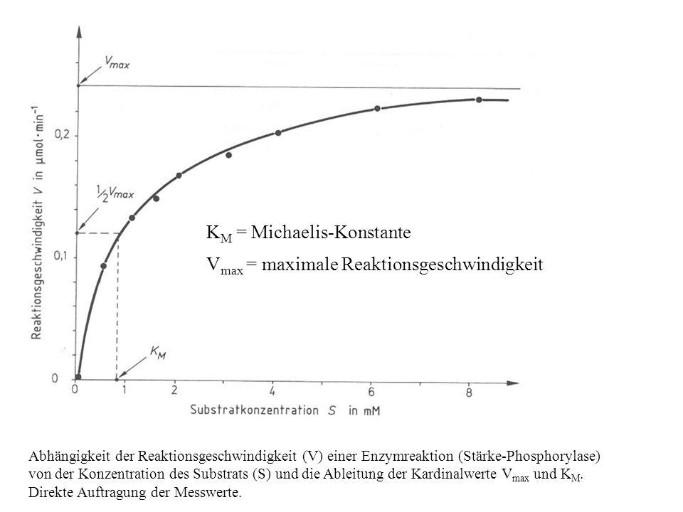 Abhängigkeit der Reaktionsgeschwindigkeit (V) einer Enzymreaktion (Stärke-Phosphorylase) von der Konzentration des Substrats (S) und die Ableitung der Kardinalwerte V max und K M.