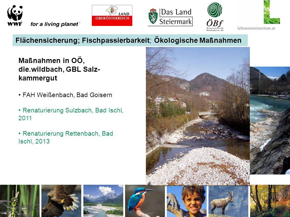 Flächensicherung; Fischpassierbarkeit; Ökologische Maßnahmen Maßnahmen in OÖ, die.wildbach, GBL Salz- kammergut FAH Weißenbach, Bad Goisern Renaturierung Sulzbach, Bad Ischl, 2011 Renaturierung Rettenbach, Bad Ischl, 2013