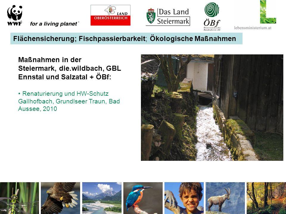 Flächensicherung; Fischpassierbarkeit; Ökologische Maßnahmen Maßnahmen in der Steiermark, die.wildbach, GBL Ennstal und Salzatal + ÖBf: Renaturierung und HW-Schutz Gallhofbach, Grundlseer Traun, Bad Aussee, 2010