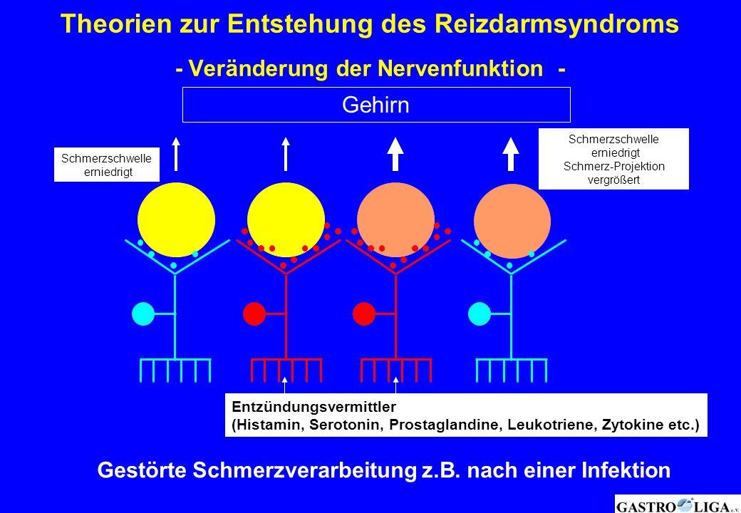 Entzündungsvermittler (Histamin, Serotonin, Prostaglandine, Leukotriene, Zytokine etc.) Gehirn Schmerzschwelle erniedrigt Schmerzschwelle erniedrigt S