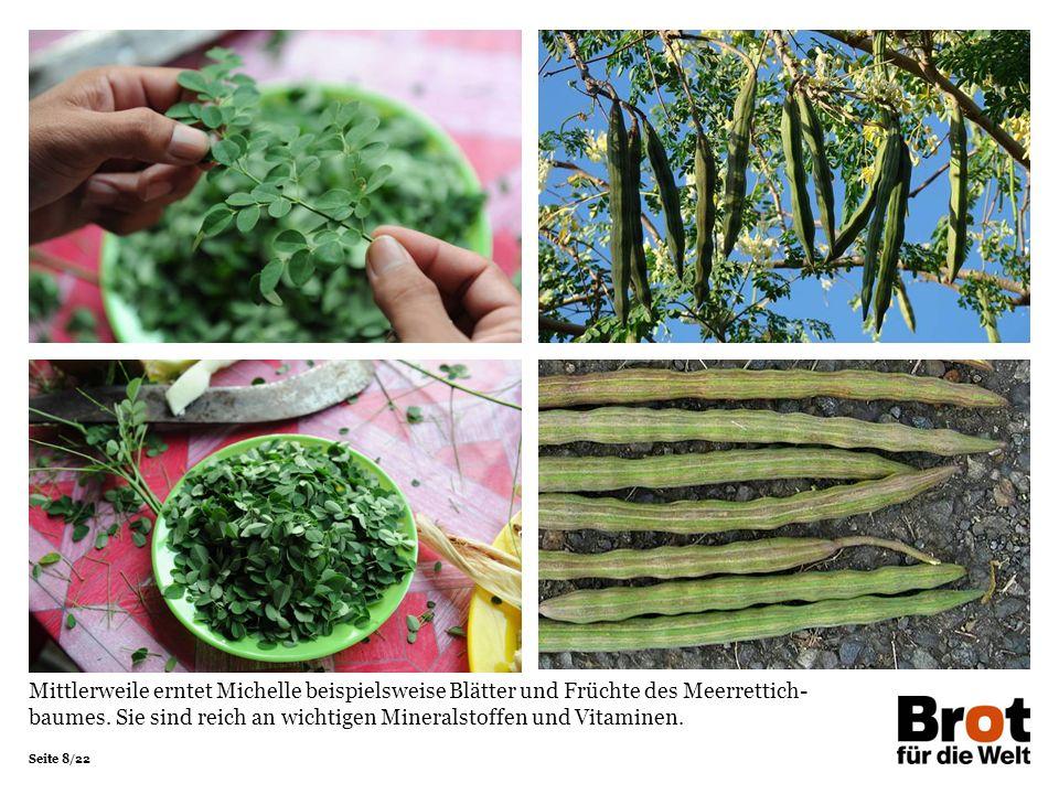 Seite 8/22 Mittlerweile erntet Michelle beispielsweise Blätter und Früchte des Meerrettich- baumes.