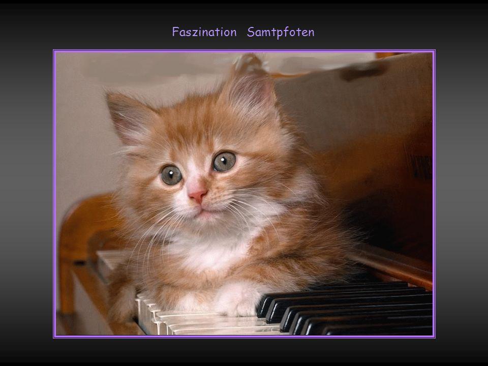 Das kleinste Katzentier ist ein Meisterstück !