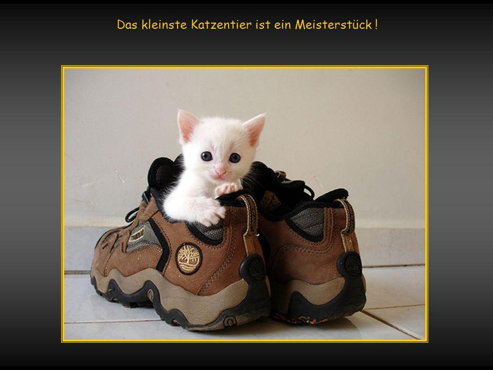 verteilt durch www.funmail2u.dewww.funmail2u.de Ob ein schwarzer Kater Unglück bringt, hängt davon ab, ob man ein Mensch ist oder eine Maus !