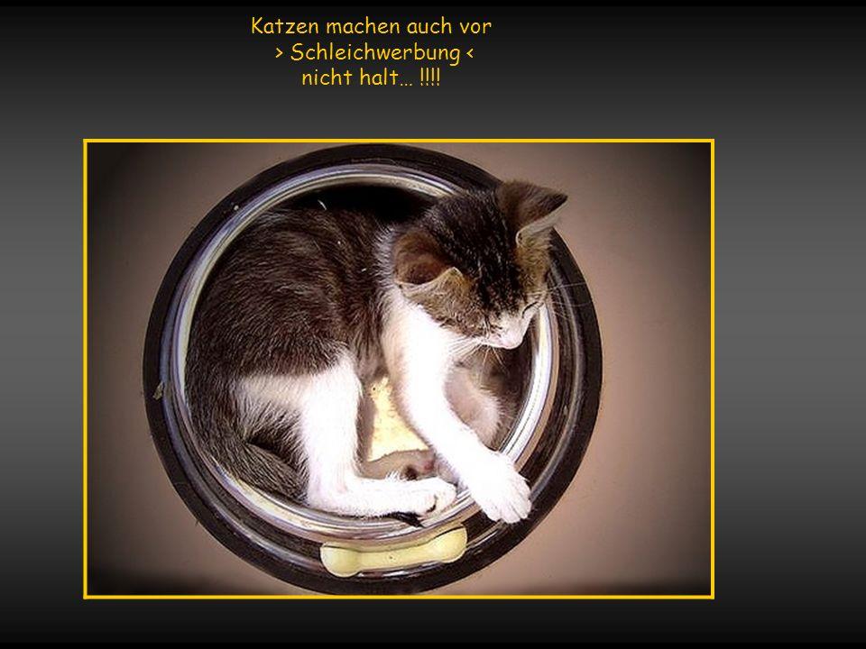 Wo immer sich eine Katze niederlässt, wird sich das Glück einfinden !