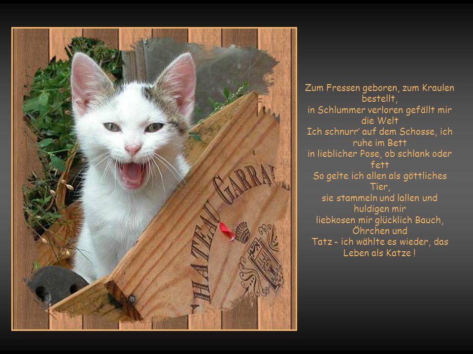 Unter allen Geschöpfen Gottes gibt es nur eines, die sich keiner Versklavung unterwirft … Das ist eine Katze !