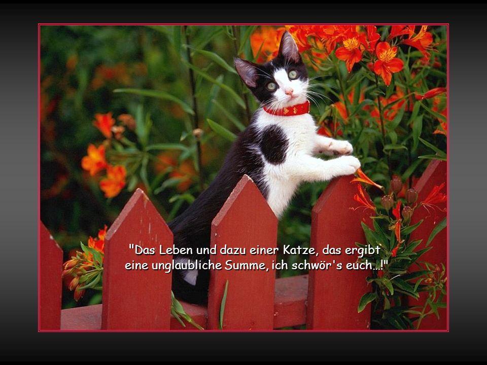 Zum Fressen geboren, zum Kraulen bestellt, in Schlummer verloren gefällt mir die Welt Ich schnurr' auf dem Schosse, ich ruhe im Bett in lieblicher Pose, ob schlank oder fett So gelte ich allen als göttliches Tier, sie stammeln und lallen und huldigen mir liebkosen mir glücklich Bauch, Öhrchen und Tatz - ich wählte es wieder, das Leben als Katze !