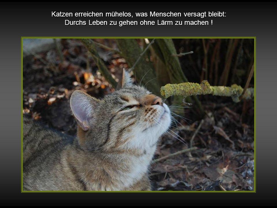 Gott schuf die Katze, damit der Mensch einen Tiger zum Streicheln hat !