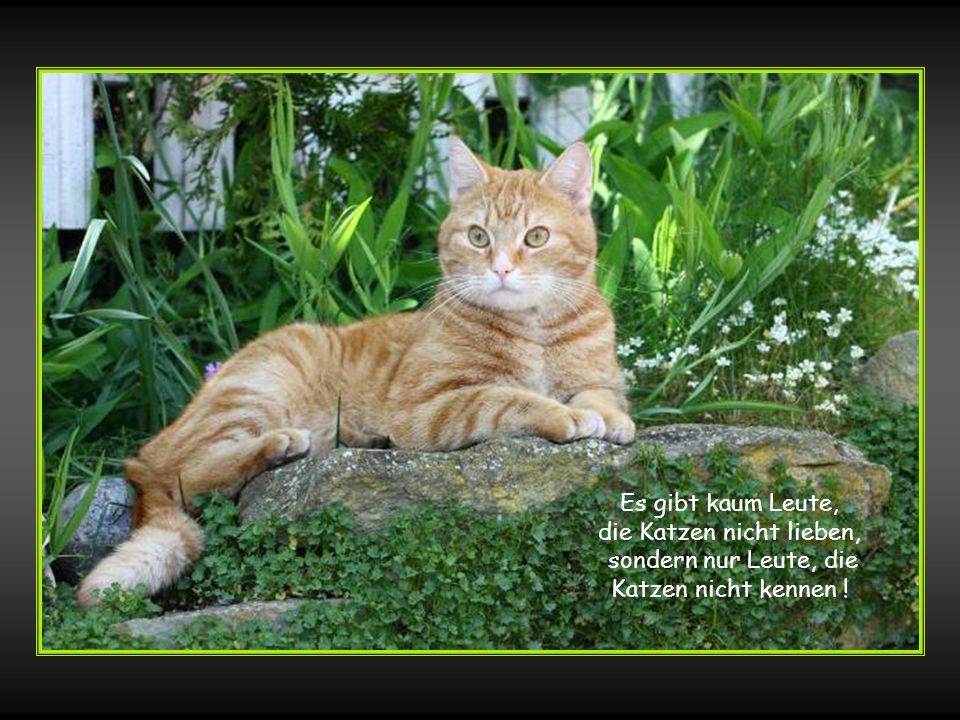 Es gibt kaum Leute, die Katzen nicht lieben, sondern nur Leute, die Katzen nicht kennen !