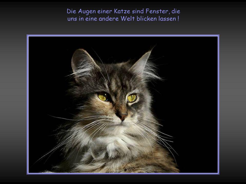 Die Augen einer Katze sind Fenster, die uns in eine andere Welt blicken lassen !