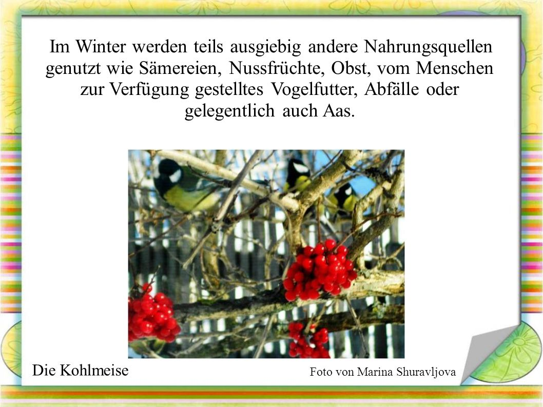 Im Winter werden teils ausgiebig andere Nahrungsquellen genutzt wie Sämereien, Nussfrüchte, Obst, vom Menschen zur Verfügung gestelltes Vogelfutter, Abfälle oder gelegentlich auch Aas.