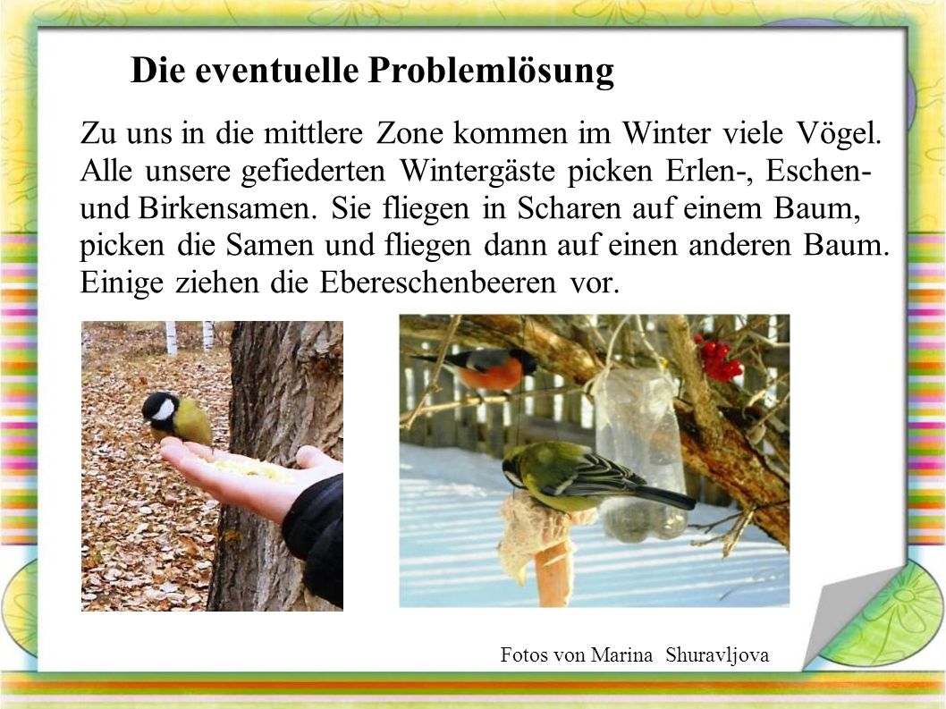 Zu uns in die mittlere Zone kommen im Winter viele Vögel.