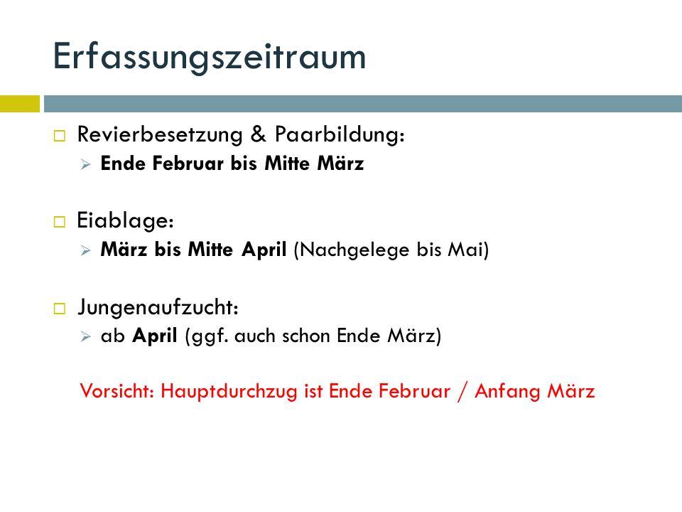 Erfassungszeitraum  Revierbesetzung & Paarbildung:  Ende Februar bis Mitte März  Eiablage:  März bis Mitte April (Nachgelege bis Mai)  Jungenaufzucht:  ab April (ggf.