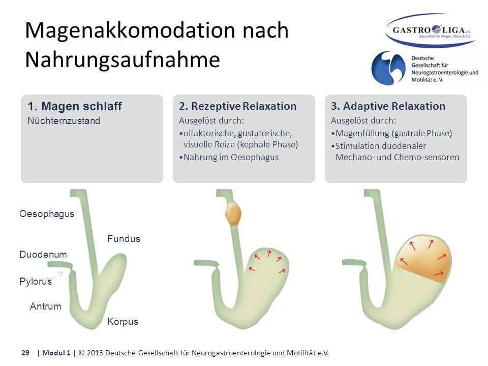 Magenakkomodation nach Nahrungsaufnahme 1. Magen schlaff Nüchternzustand 2.