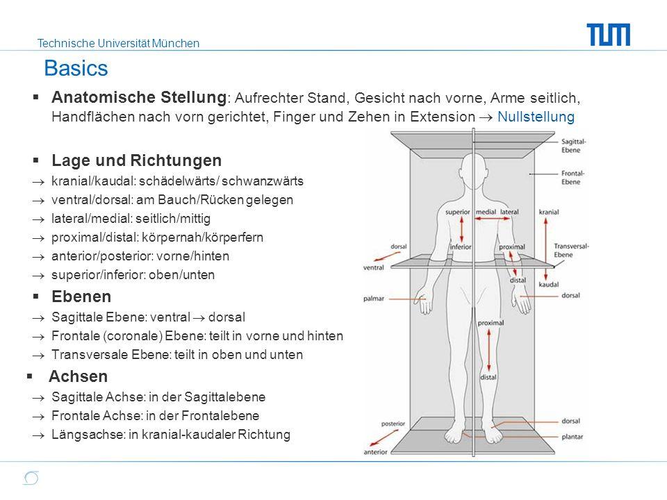 Technische Universität München Basics: Gelenke und Beweglichkeitsausmaß  Sprunggelenk (Scharnier- und Kugelgelenk)  Dorsalflex/Plantarflex (20-0-45)  Supination/Pronation (35-0-20)  Kniegelenk (Scharniergelenk)  Extension/Flexion (0-0-140)  Hüftgelenk (Kugelgelenk)  Extension/Flexion (10-0-125)  Abduktion/Adduktion (45-0-30)  Außenrotation/Innenrotation (45-0-45)  Schultergelenk (Kugelgelenk)  Extension/Flexion (45-0-180)  Abduktion/Adduktion (180-0-45)  Außenrotation/Innenrotation (90-0-70) bei 90° Abduktion  Ellbogengelenk (Scharniergelenk)  Extension/ Flexion (0-0-145)  WS  Flexion/ Extenion  Rotation  Lateralflexion Quelle: Muskeln.