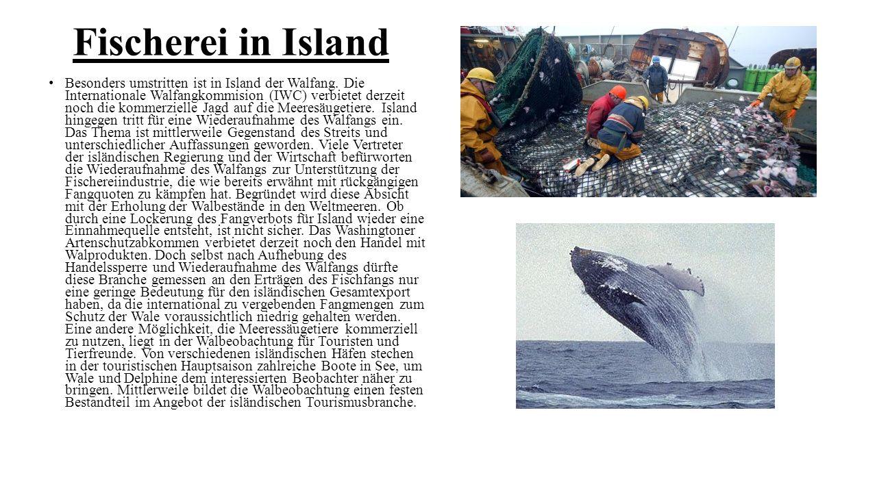 Fischerei in Island Besonders umstritten ist in Island der Walfang. Die Internationale Walfangkommision (IWC) verbietet derzeit noch die kommerzielle