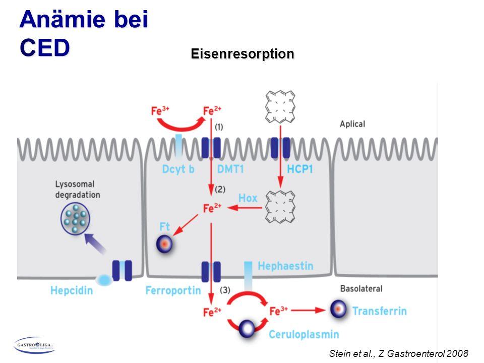 Anämie bei CED Hepcidin in der Regulation der Eisenresorption Stein et al., Z Gastroenterol 2008