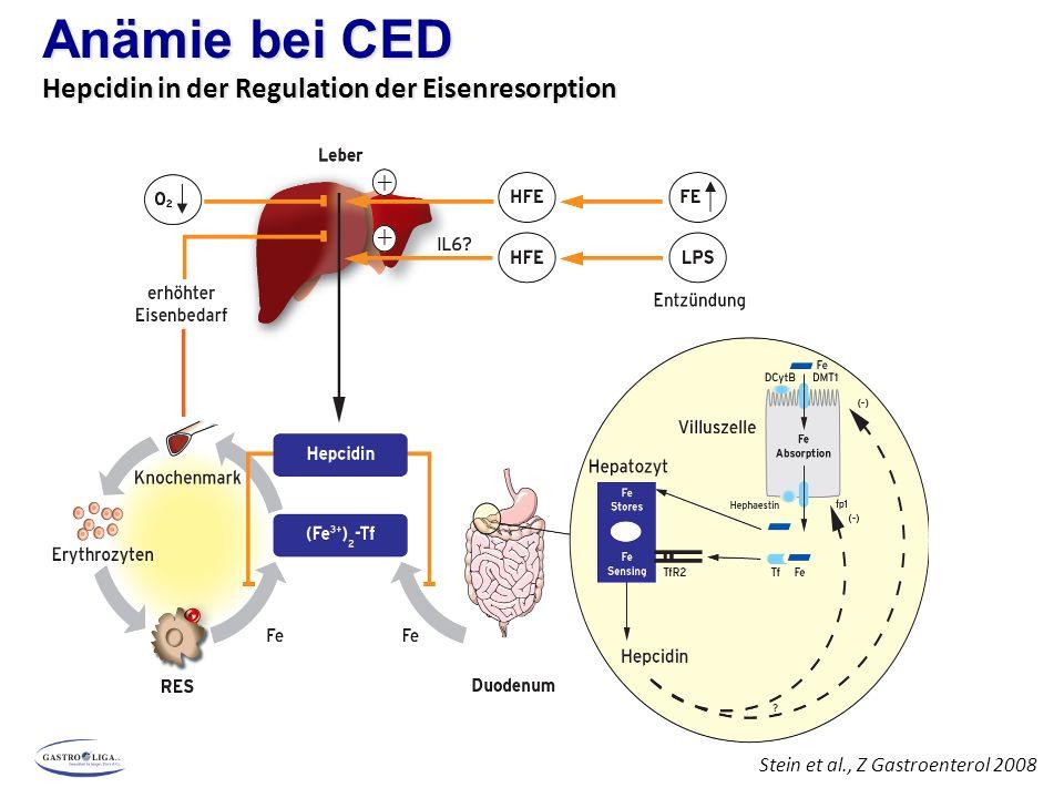 Chronisch-entzündliche Darmerkrankungen Eisenmangelanämie Eisenresorption bei MC Semrin et al.