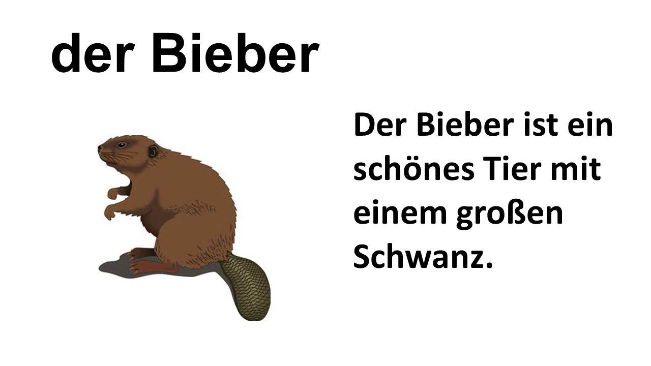 der Bieber Der Bieber ist ein schönes Tier mit einem großen Schwanz.