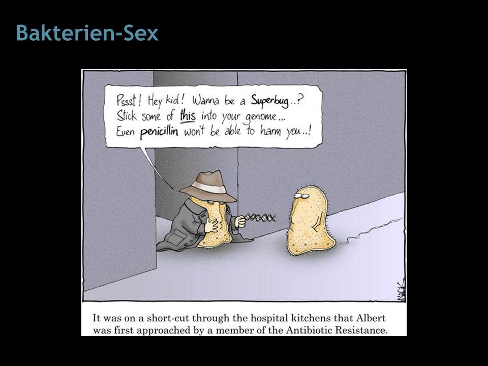 Bakterien-Sex