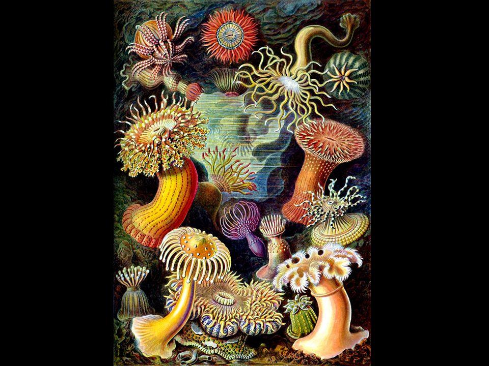 Häufige Fragen Bringt Evolution zwangsläufig »höhere Lebensformen«.