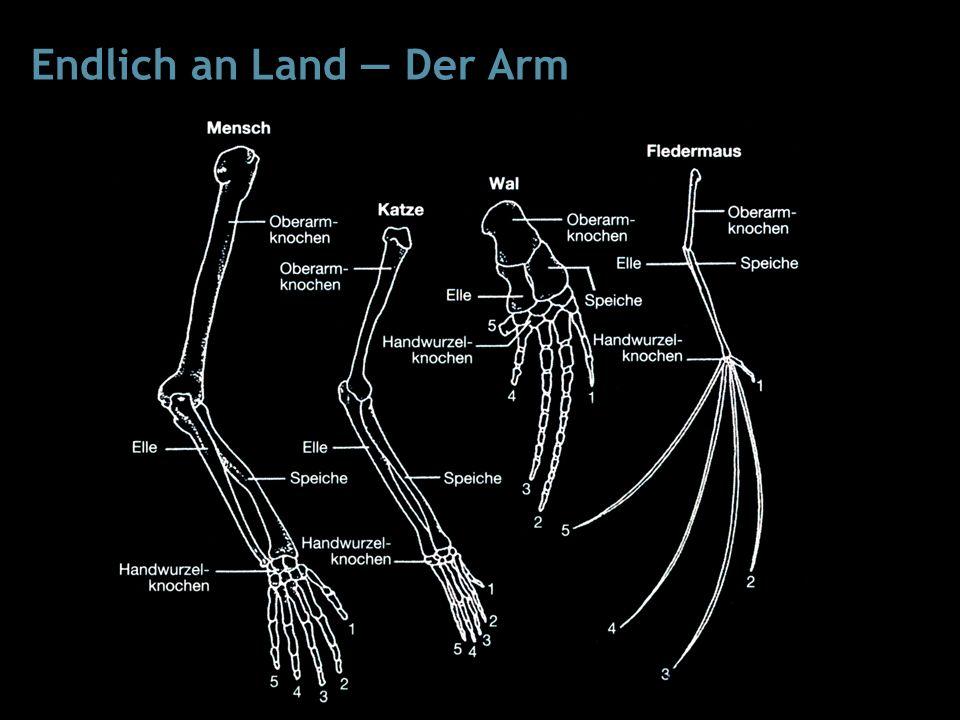 Endlich an Land — Der Arm