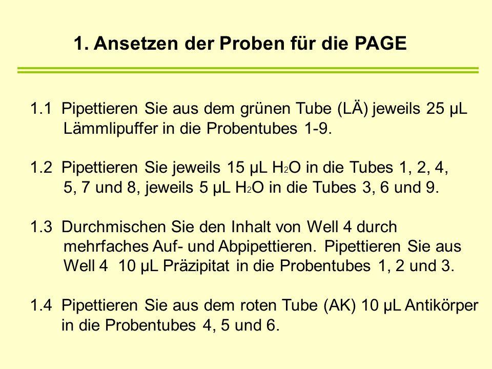 1.1 Pipettieren Sie aus dem grünen Tube (LÄ) jeweils 25 µL Lämmlipuffer in die Probentubes 1-9. 1.2 Pipettieren Sie jeweils 15 µL H 2 O in die Tubes 1