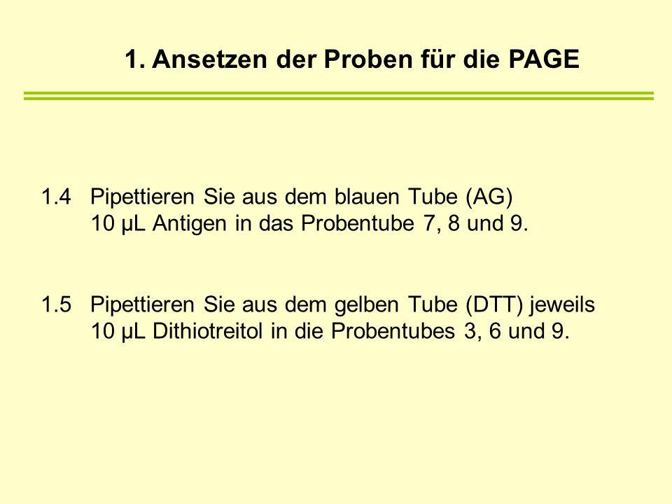 1.4 Pipettieren Sie aus dem blauen Tube (AG) 10 µL Antigen in das Probentube 7, 8 und 9. 1.5 Pipettieren Sie aus dem gelben Tube (DTT) jeweils 10 µL D