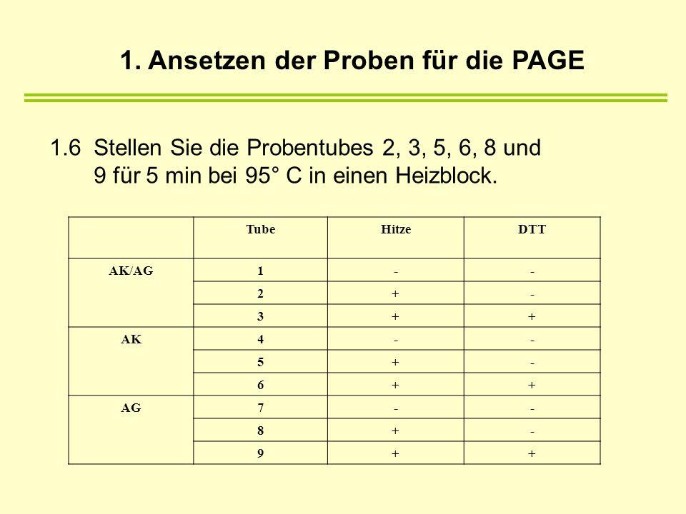 1.6 Stellen Sie die Probentubes 2, 3, 5, 6, 8 und 9 für 5 min bei 95° C in einen Heizblock. TubeHitzeDTT AK/AG1-- 2+- 3++ AK4-- 5+- 6++ AG7-- 8+- 9++