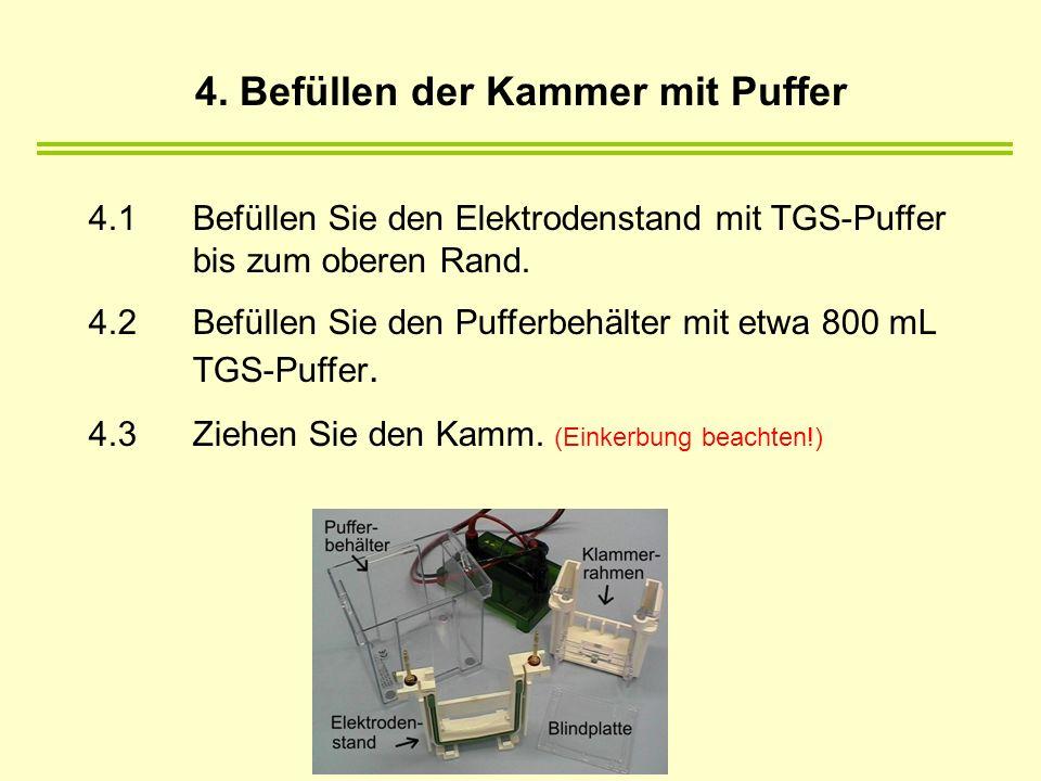 4.1Befüllen Sie den Elektrodenstand mit TGS-Puffer bis zum oberen Rand. 4.2Befüllen Sie den Pufferbehälter mit etwa 800 mL TGS-Puffer. 4.3Ziehen Sie d