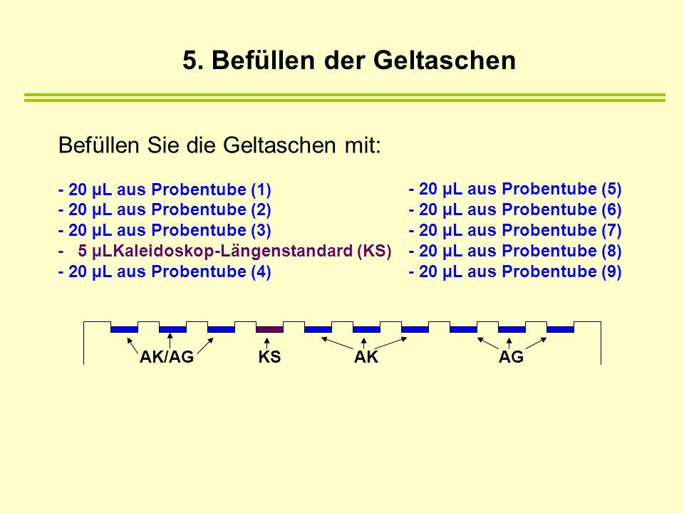 Befüllen Sie die Geltaschen mit: - 20 µL aus Probentube (1) - 20 µL aus Probentube (2) - 20 µL aus Probentube (3) - 5 µLKaleidoskop-Längenstandard (KS) - 20 µL aus Probentube (4) - 20 µL aus Probentube (5) - 20 µL aus Probentube (6) - 20 µL aus Probentube (7) - 20 µL aus Probentube (8) - 20 µL aus Probentube (9) AKAGAK/AGKS 5.