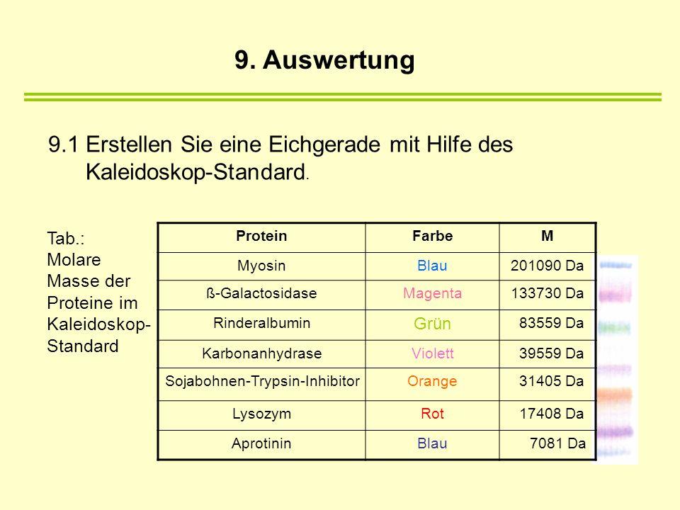 Tab.: Molare Masse der Proteine im Kaleidoskop- Standard 9.1 Erstellen Sie eine Eichgerade mit Hilfe des Kaleidoskop-Standard. ProteinFarbeM MyosinBla