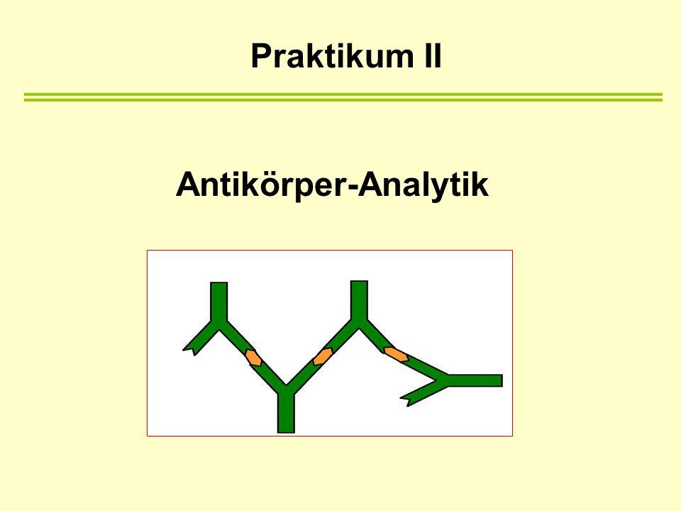 Antikörper-Analytik Praktikum II